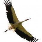Міжнародний день мігруючих птахів