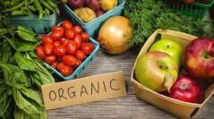 Німеччина сприятиме законодавчому врегулюванню органічного виробництва в Україні