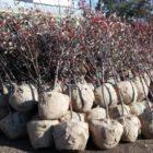 Відверто: про спил дерев та озеленення у Дніпрі