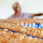 Мільйони яєць, вилучених з європейських полиць, можуть бути токсичними